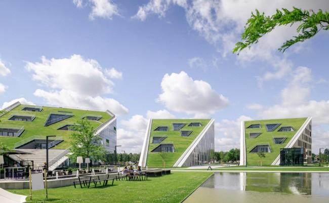hellend groendak voor Corda Campus te Hasselt