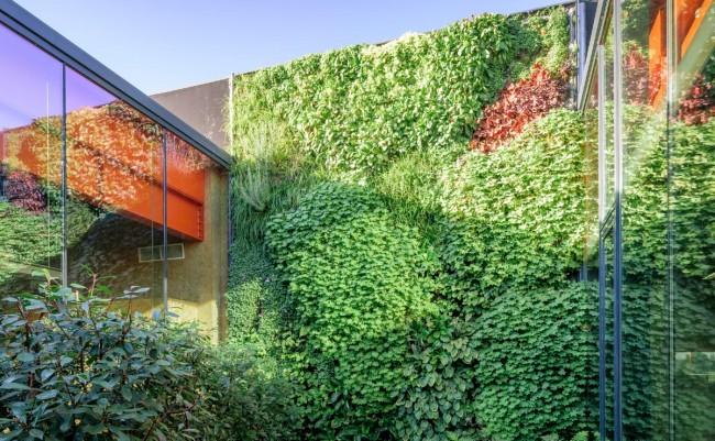 groengevel en daktuin in patio bij de Verffabriek te Hamme