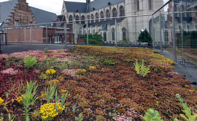 Extensive greenroof - Mechelen