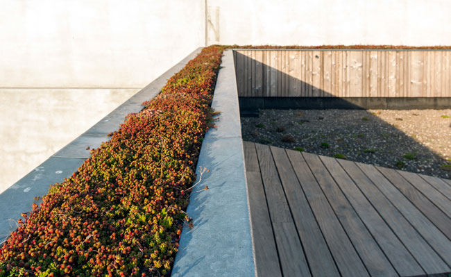 Solargreenroof - Ecopuur Nevele