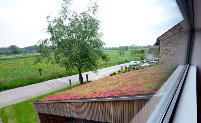 sloping greenroof - Schellebelle